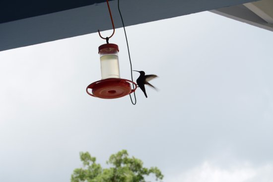 The Blue House Boutique Bed & Breakfast: Hummingbird feeding