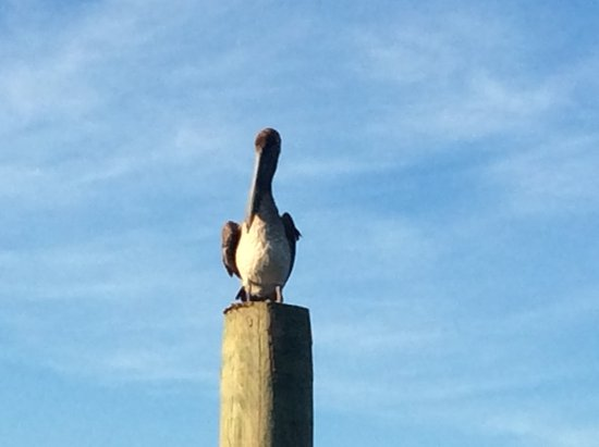 Shallotte, NC: A local pelican takes a rest at the boat dock