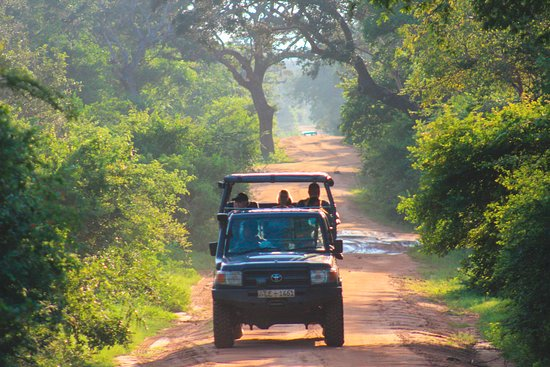 during Safari