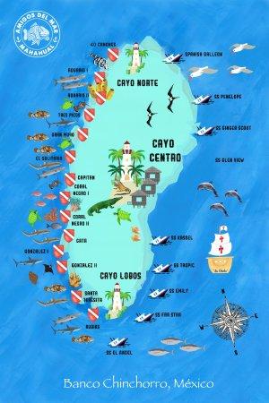 Dive Sites In Banco Chinchorro Picture Of Amigos Del Mar Mahahual Tripadvisor