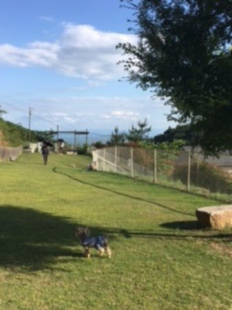 Setouchi, Japonia: ドッグラン向こうに見えるのが瀬戸内海