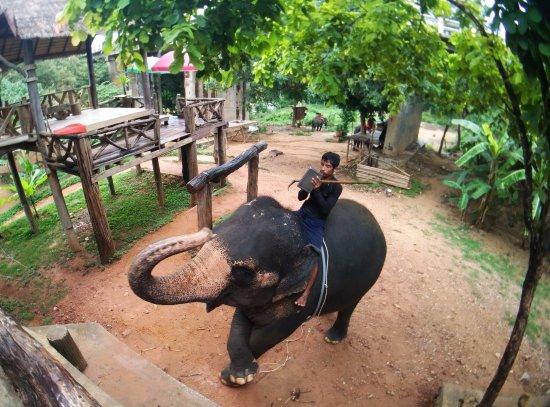 Thailand Private Tour - Day Tours: Elephant Riding & Bathing