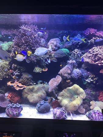 Aquarium Kemah Menu Prices Restaurant Reviews