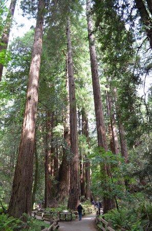 Extranomical Tours: Muir Woods - redwoods