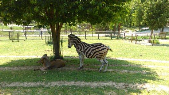 Parco Safari delle Langhe Murazzano CN