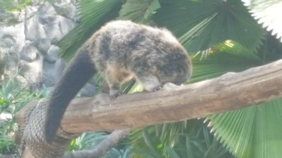 Bali Safari & Marine Park: Eine Mischung aus Bär und Katze, der Name ist mir nicht mehr geläufig.
