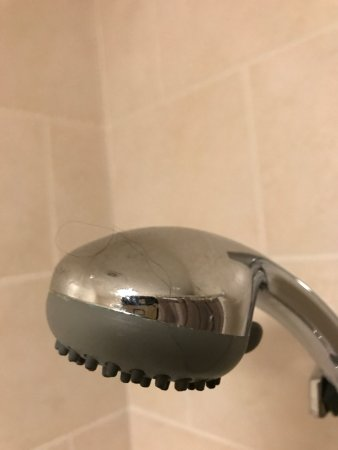 The Old Dairy Guest House: Disgusting hairs in the bath, wrapped around bathplug and on showerhead. Irrespective of price c