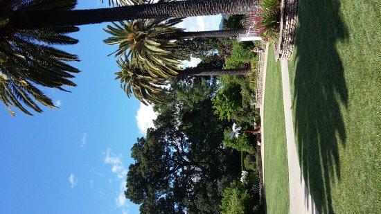 S:T Helena, Kalifornien: 20170512_151019_large.jpg