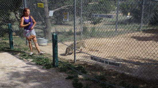 Ramah, NM: Coyotes
