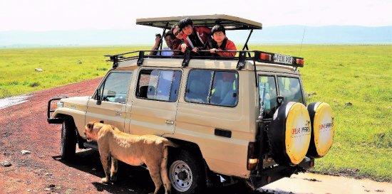 Feline Safaris