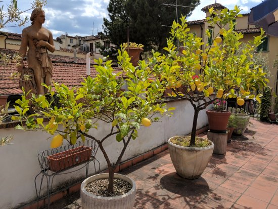 إل بارجيللينو: The lemon-tree-lined terrace