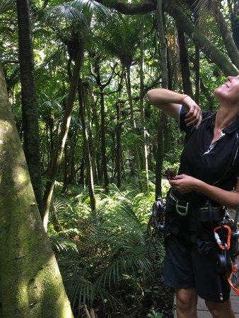 Onetangi, New Zealand: Bush walk lead by Sarah