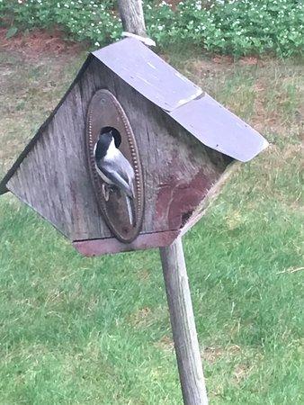Green Lake, WI: bird house next to the porch