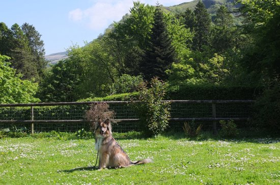 Penycae, UK: Dog friendly garden and view