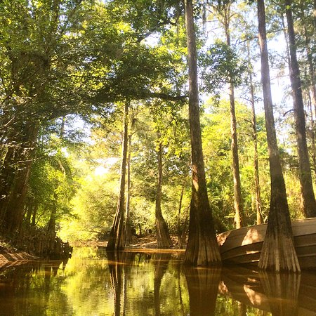 Honey Island Swamp Tour New Orleans Review