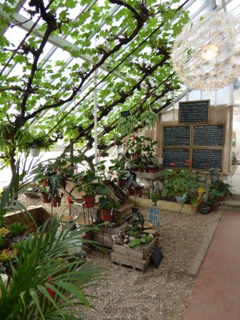 The Walled Nursery Cafe House Plants Also For