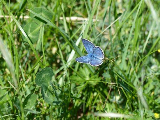 Montdardier, France : au contact de la nature et des papillons Argus