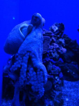Wailuku, ฮาวาย: осьминог