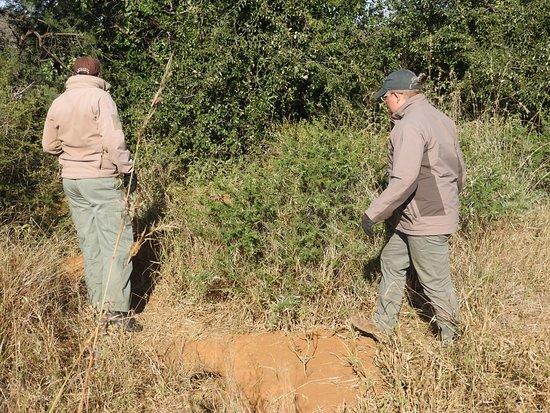 Madikwe Game Reserve, Sudáfrica: Sam and Tyrone tracking