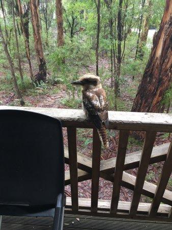 Pemberton, Australia: photo0.jpg