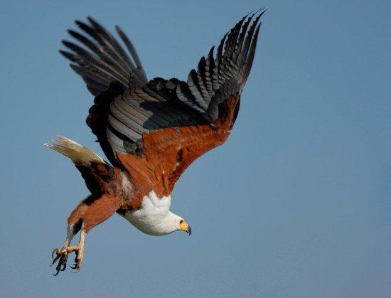 Msuna, Zimbabwe: Birder's paradise!
