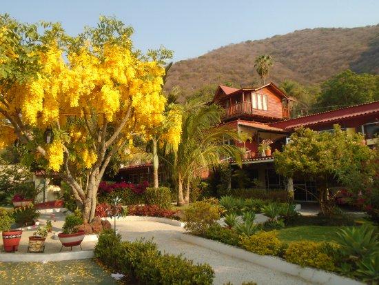 Casa de la Abuela: Bello jardín con vegetación abundante