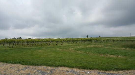 Raphine, Вирджиния: Rockbridge vineyards