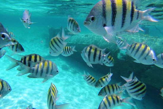 Bahama Steve Boat Charters