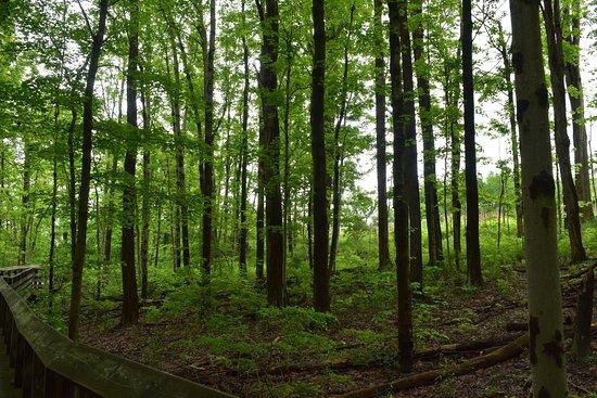 Sagamore Hills, OH: photo2.jpg