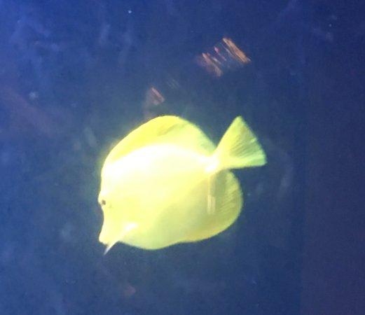 Atlantic City Aquarium Historic Gardner's Basin: photo0.jpg