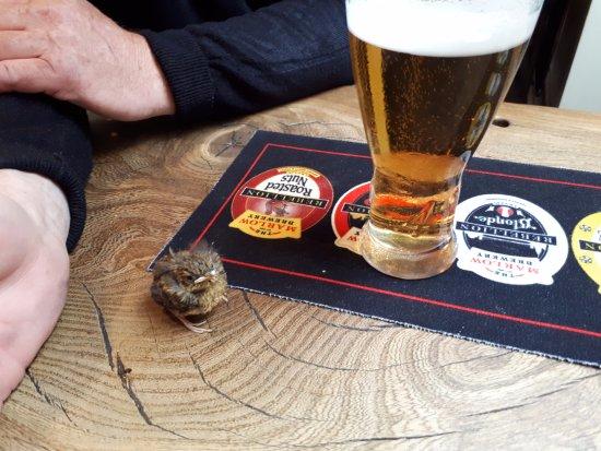 Sydenham, UK: Resident baby robin enjoying the beer !!