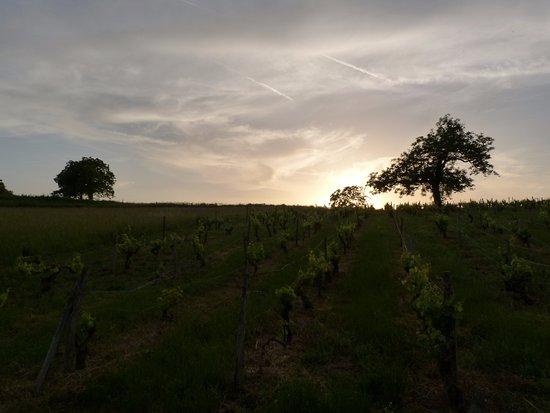 Montmoreau-Saint-Cybard, França: The vineyard