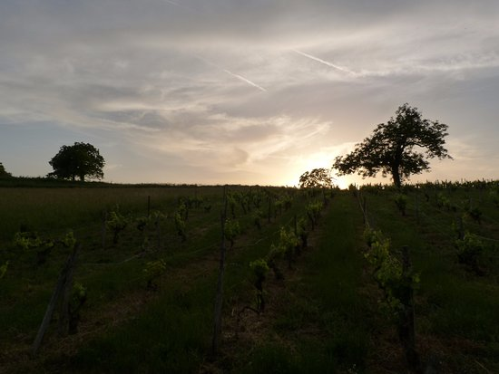 Montmoreau-Saint-Cybard, France: The vineyard