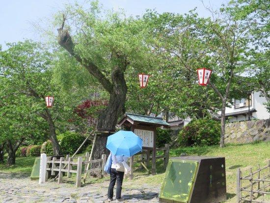 Ganryu Yukari no Yanagi
