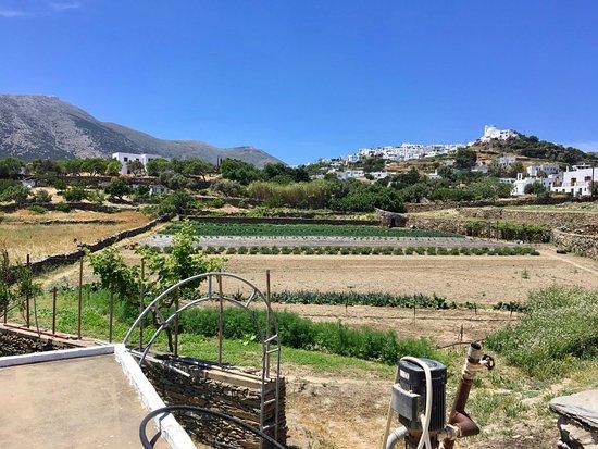 Narlis Farm
