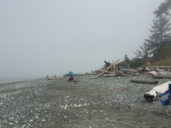 Oak Harbor, واشنطن: Lots and lots of driftwood for fort building