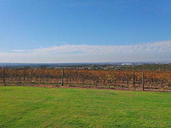 Constantia, Sydafrika: View of the vineyard