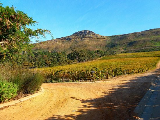 Constantia, Zuid-Afrika: The mountains provde a comforing backdrop