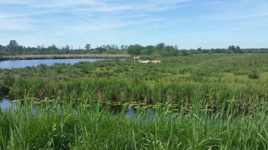 Overijssel Province, The Netherlands: Prachtig natuurgebied met prima fietspaden