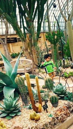 Garfield Park Conservatory: photo8.jpg