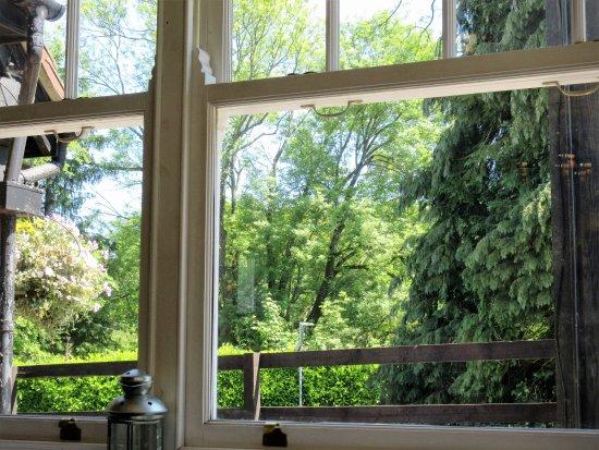 The Flying Bull Inn: Window View