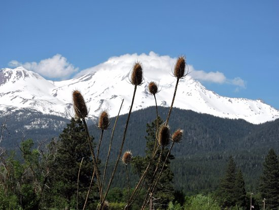 mount shasta cloud crown マウントシャスタ mount shastaの写真