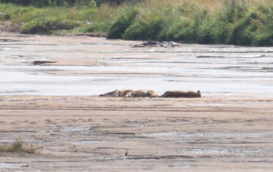 Zululand, South Africa: Leeuwen