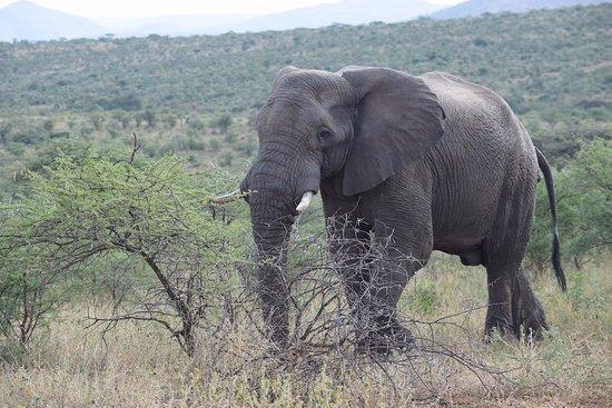 Zululand, South Africa: Olifanten