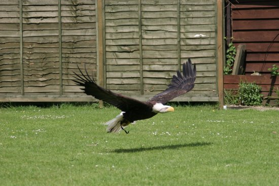 Ringwood, UK: One of the great photo's I was able to take at the flying displays held during the day