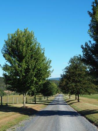 Millboro, VA: Driveway to main house and lodges