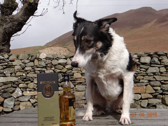 Whitbeck, UK: Gizmo loves the 21 year old Springbank