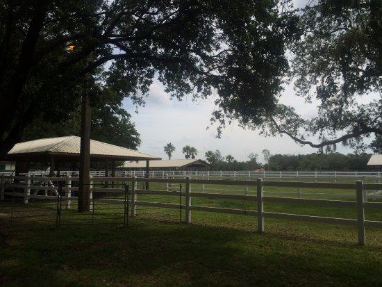 Odessa, FL: The beautiful grounds at the Golden Spirit Alpaca Ranch