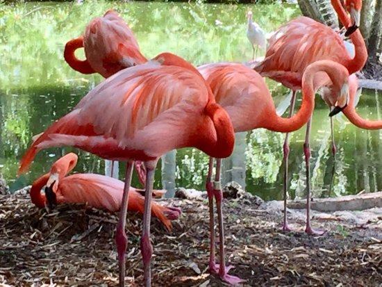 Flamingo Gardens: photo1.jpg