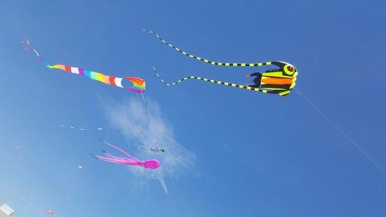 Hampton Falls, NH: Kite festival